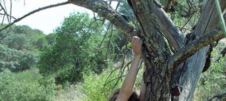 Salope nue attachée à un arbre